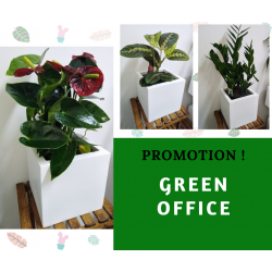 Promotion Green Office