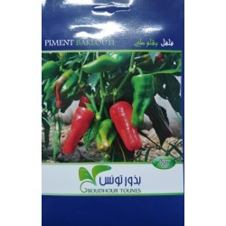 Graine de piment tunisie
