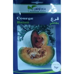 Graine de courge tunisie